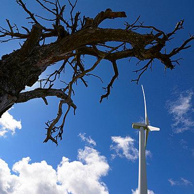 Ecology - p813m808934 by B.Jaubert