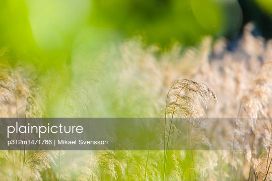 p312m1471786 von Mikael Svensson