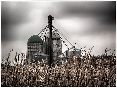 Silos in maize field - p1154m1110178 by Tom Hogan