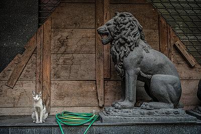 Lion sculpture and domestic cat - p1437m1502378 by Achim Bunz
