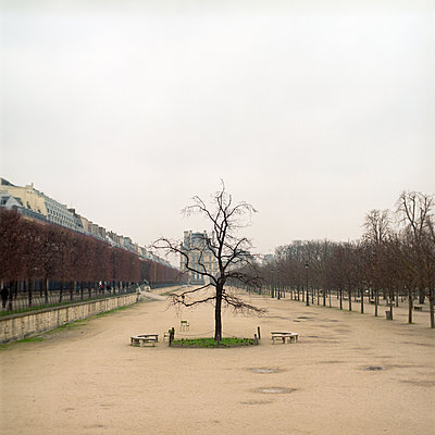 Solitary tree at the jardin des Tuileries in Paris - p1610m2181510 by myriam tirler