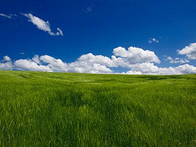 Green wheat and blue sky - p8130063 by B.Jaubert