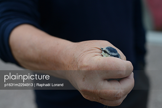 Hand holding bird - p1631m2294913 by Raphaël Lorand