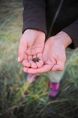Small frog in child''s hand - p312m670306f by Hans Berggren
