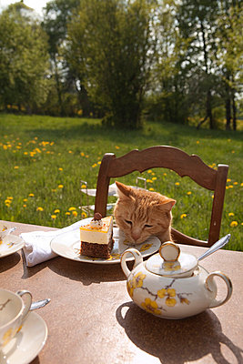 Cat with cake - p5250078 by Anne Deppe