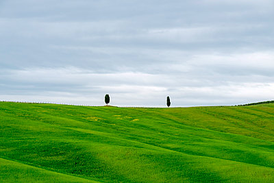 Rolling hills with wheat fields and cypress trees, Val d'Orcia, Tuscany, Italy - p1166m2148619 by Cavan Images