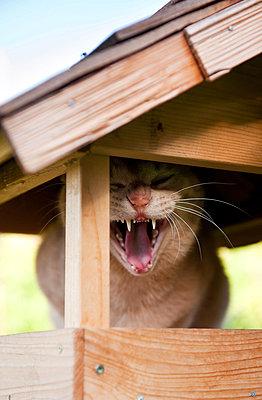 Cat in birdhouse - p533m925180 by Böhm Monika