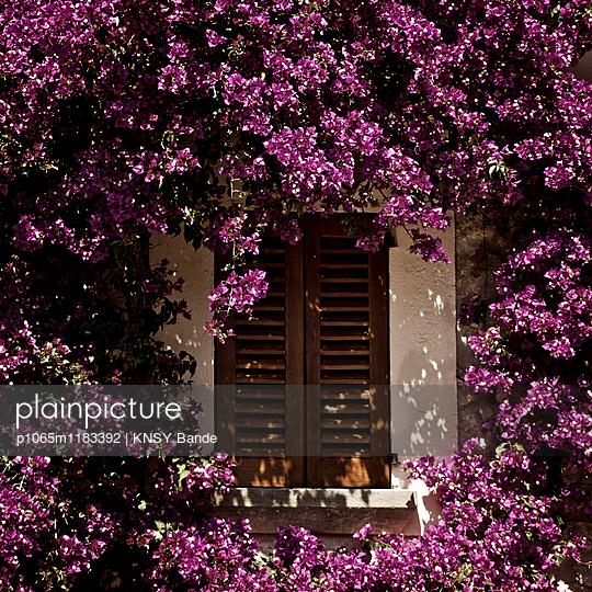 Fenster umrahmt von lila Blüten - p1065m1183392 von KNSY Bande