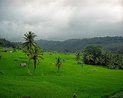 Indonesia, Bali, rice fields - p2684451 by Rui Camilo