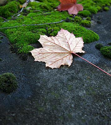 Autumn - p445m729209 by Marie Docher