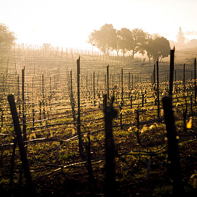 Vineyard - p6692496 by Ben Miller