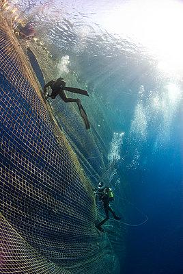 Divers working on seine fishing net, Atlantic bluefin tuna fishing, Malta, Mediterranean Sea - p871m2123089 by Antonio Busiello