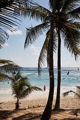 Papaya Playa  - p1499m2038668 by Marion Barat