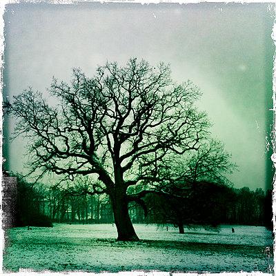 Baum im Jenischpark - p979m1146577 von Werner Gritzbach