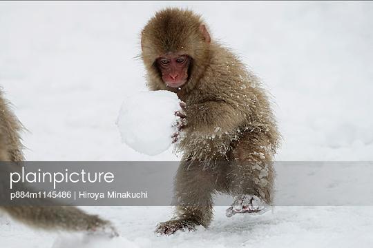 p884m1145486 von Hiroya Minakuchi