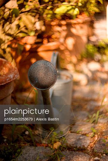 Inside a garden - p1654m2253679 by Alexis Bastin