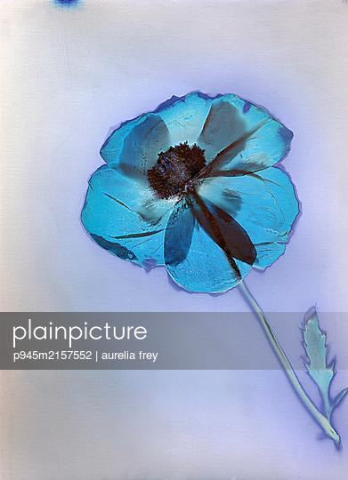 Single flower - p945m2157552 by aurelia frey