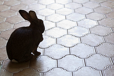Hase im Hausflur - p7390160 von Baertels