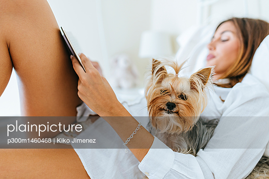 Portrait of Yorkshire Terrier in bed with owner reading a book - p300m1460468 by Kiko Jimenez