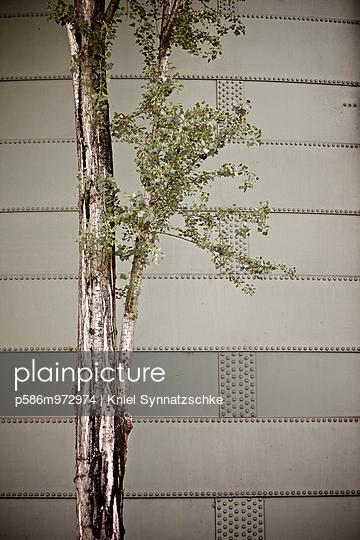 Baum vor einer Stahlwand - p586m972974 von Kniel Synnatzschke