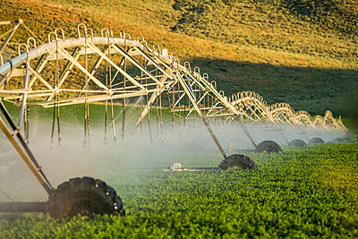 Irrigation system spraying crop field - p1427m2128267 by Steve Smith