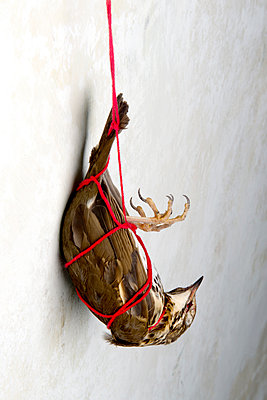 Toter Vogel - p451m1214875 von Anja Weber-Decker
