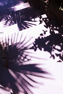 Shadow of palm leafs - p1149m1573482 by Yvonne Röder