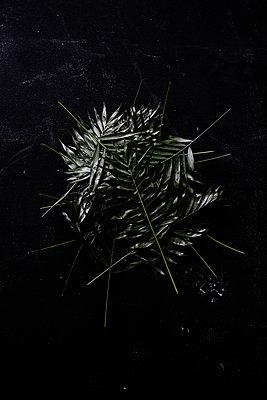 Palm tree - p1212m1119479 by harry + lidy