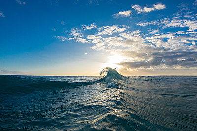 Wave in Pacific Ocean at sunrise, Oahu, Hawaii Islands, USA - p343m1569079 by Sean Davey