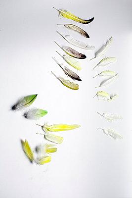 Vogelgefiederwechsel - p580m971689 von Eva Z. Genthe