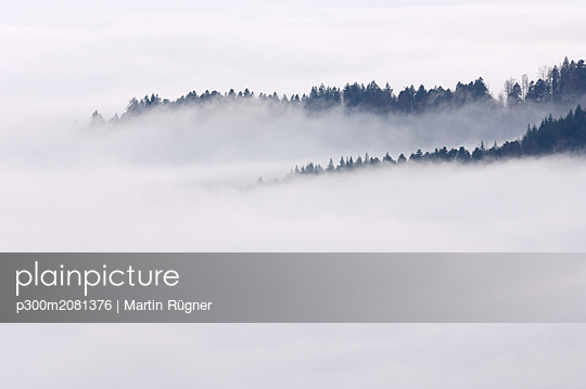 Germany, Baden-Wurttemberg, Forest trees standing out of fog in the valley, Black Forest - p300m2081376 by Martin Rügner