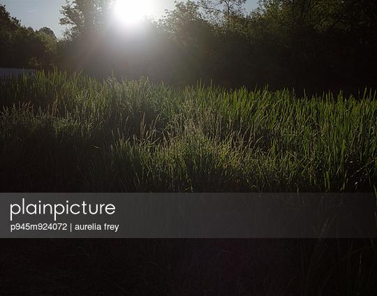 Morgens - p945m924072 von aurelia frey