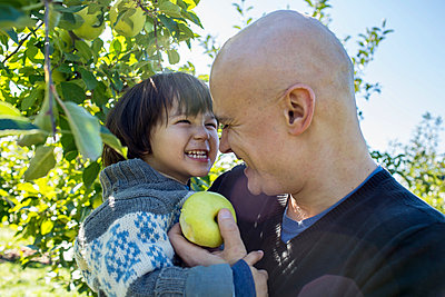 Apple Picking - p535m947668 by Michelle Gibson