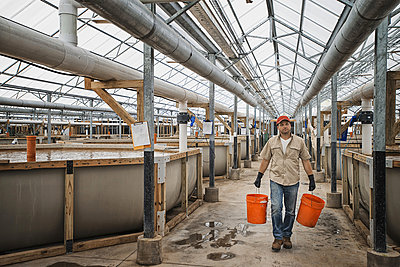 A large fish farm building interior with raised water tanks and breeding areas, and a man with buckets of water or feed.  - p1100m876342f by Tim Pannell