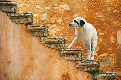 Hund - p1205m1033038 von Toni Anzenberger
