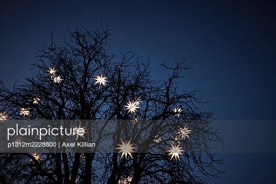 Germany, Tree with stars as Christmas illumination in the evening - p1312m2228800 by Axel Killian