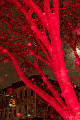 Tree in snowstorm at night - p1614m2231640 by James Godman