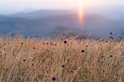 Spain, Catalonia, Grasses on Montcau at sunset - p300m2012328 von VITTA GALLERY