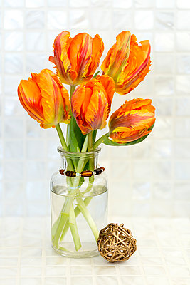 Orange tulips in a decorative vase against a white background - p442m2019757 by Lorna Rande
