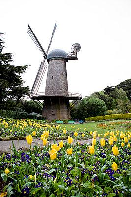 Tulpen vor der Mühle - p5350112 von Michelle Gibson