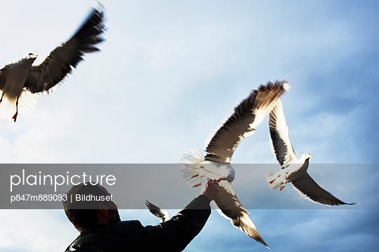 Person Feeding Flying Birds
