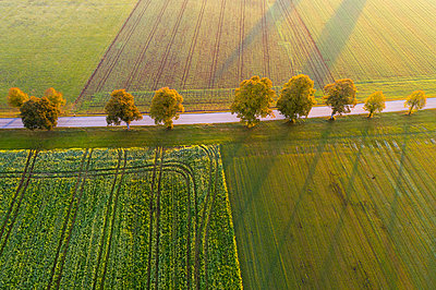 Germany, Bavaria, tree-lined country road near Dietramszell at sunrise, drone view - p300m2081470 by Martin Siepmann