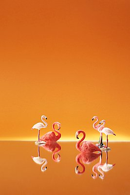 Miniature flamingos against orange background - p237m1461365 by Thordis Rüggeberg