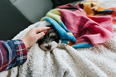 Sleepy puppy - p1507m2172827 by Emma Grann