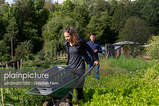 Woman pushing wheelbarrow on allotment - p312m2217202 by Christian Ferm