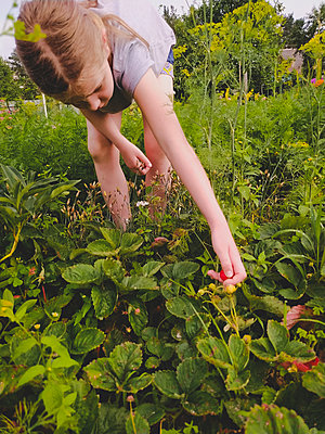 Girl is picking ripe strawberries at the garden in Ukraine closeup - p1166m2290266 by Cavan Images