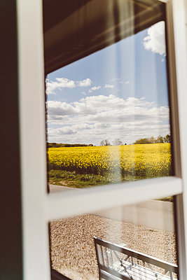 Blick aus dem Fenster auf ein Rapsfeld - p432m2191397 von mia takahara