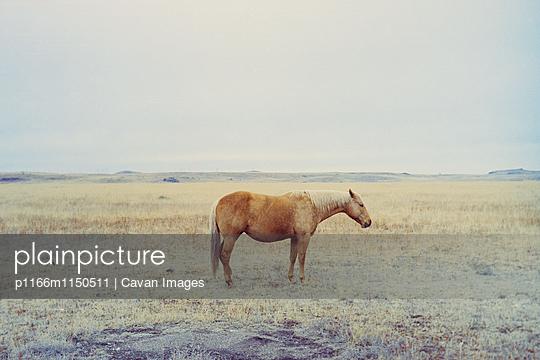 p1166m1150511 von Cavan Images
