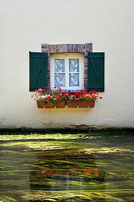 Window - p248m710121 by BY