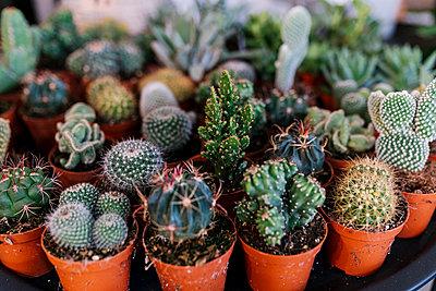 Varieties of succulent and cacti on display at store - p300m2274219 by Ezequiel Giménez